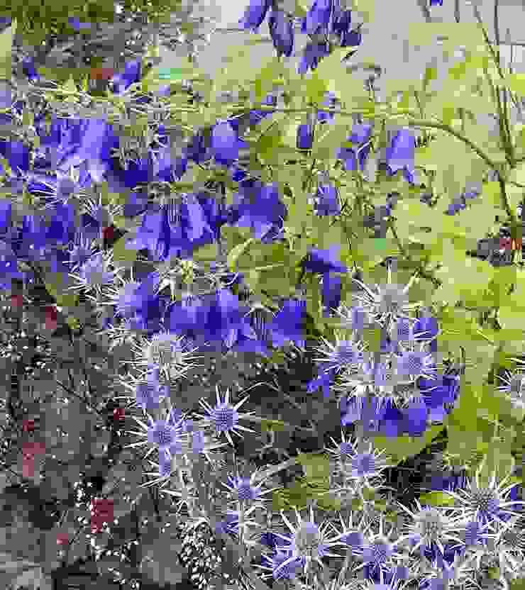 Mixed blues Rustikaler Garten von Anne Macfie Garden Design Rustikal