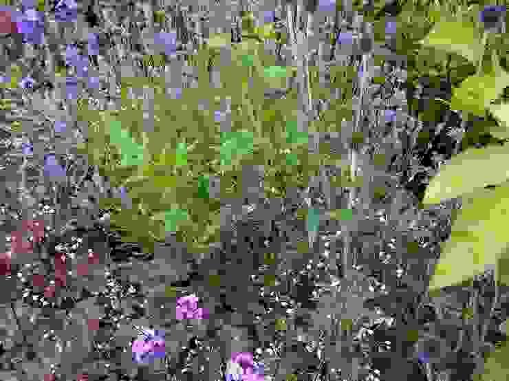 Pinks and purples Rustikaler Garten von Anne Macfie Garden Design Rustikal