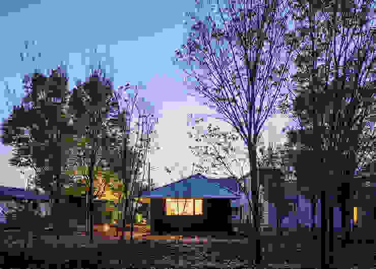 欅林に面する外観(秋) モダンな 家 の m・style 一級建築士事務所 モダン 木 木目調