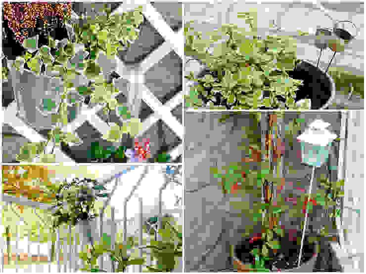ROBERTA BELLOTTI 花園植物與花