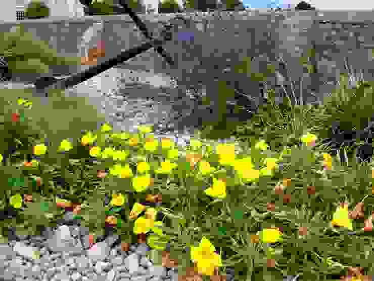 Jardins  por Roger Webster Garden Design,