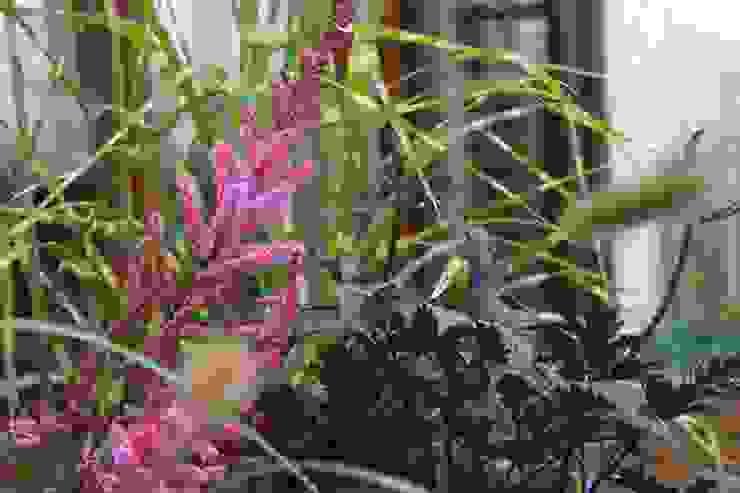 GREENERIA Modern garden