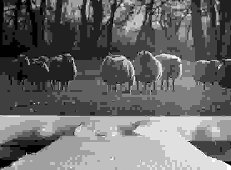 Decoración de habitación con papel pintado impreso Paredes y suelos de estilo moderno de Shoptoshop.com Moderno