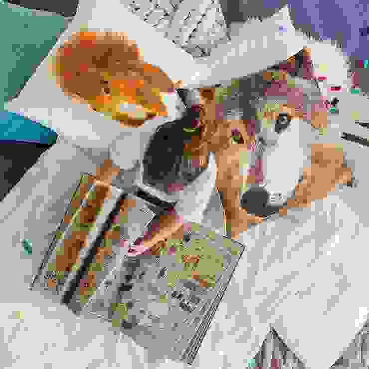 Poduszki Wiewiórka, Wilk od Makalulu Minimalistyczny