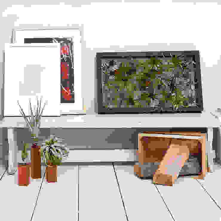 Lebendiges Wandbild mit Luftpflanzen von EVRGREEN Vertriebs GmbH Ausgefallen