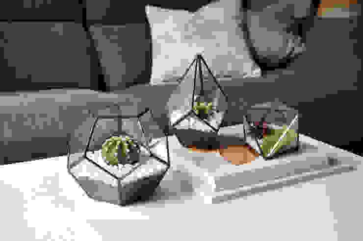 Terrarios geométricos de ZetaGlass Moderno Vidrio