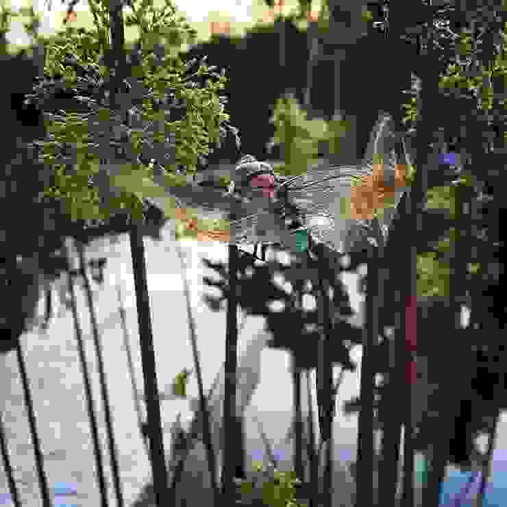 La muta della libellula di suingiardino Rurale