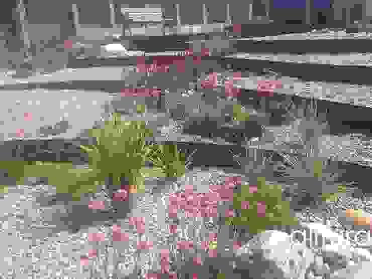 Vibrant Colours Modern garden by Alitura Landscape and Garden Design Modern