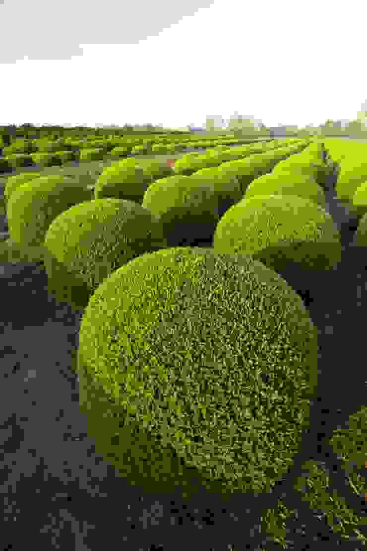 Jardins modernos por Solitair Moderno