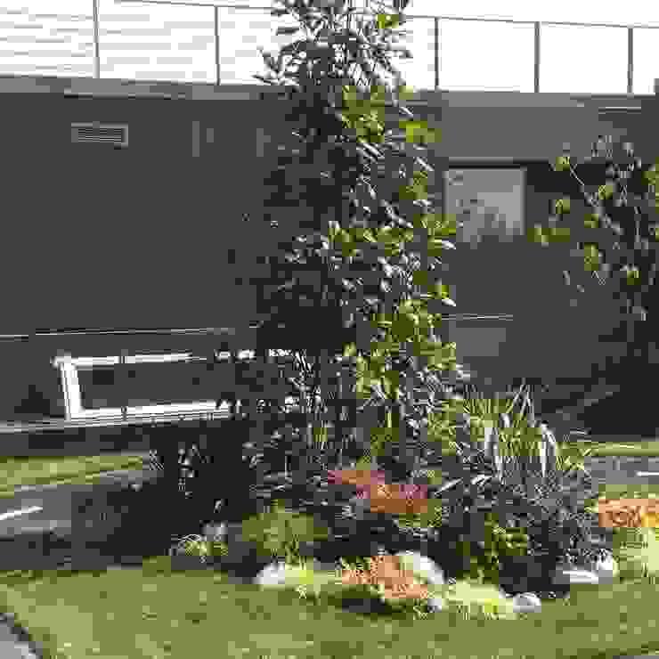 abelia peyzaj Mediterranean style garden
