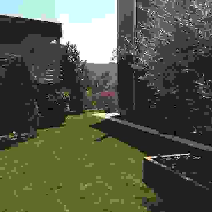 abelia peyzaj Minimalist style garden