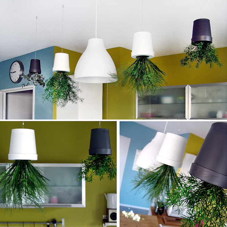Suspensions végétales d'intérieur par homify Éclectique