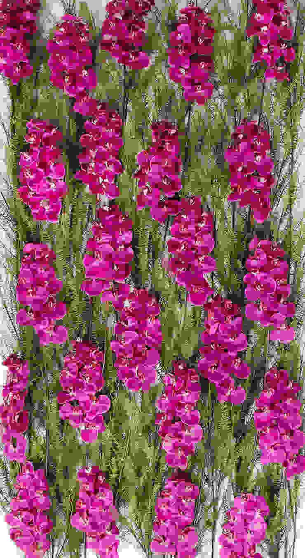 Vibrant Orchids Wall de Materflora Lda. Moderno