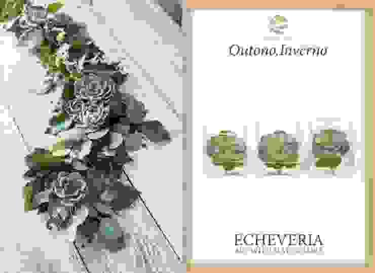 Echeverias arrangements Materflora Lda. HouseholdPlants & accessories