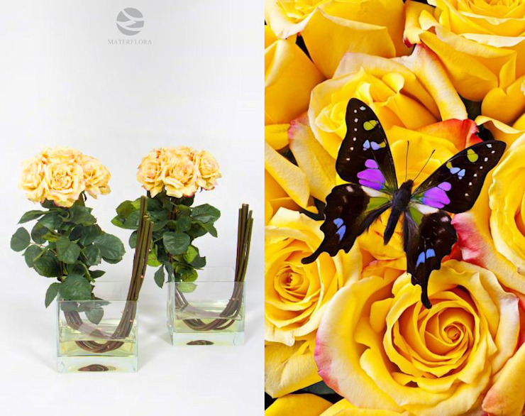 Yellow Roses arrangement Materflora Lda. HogarPlantas y accesorios