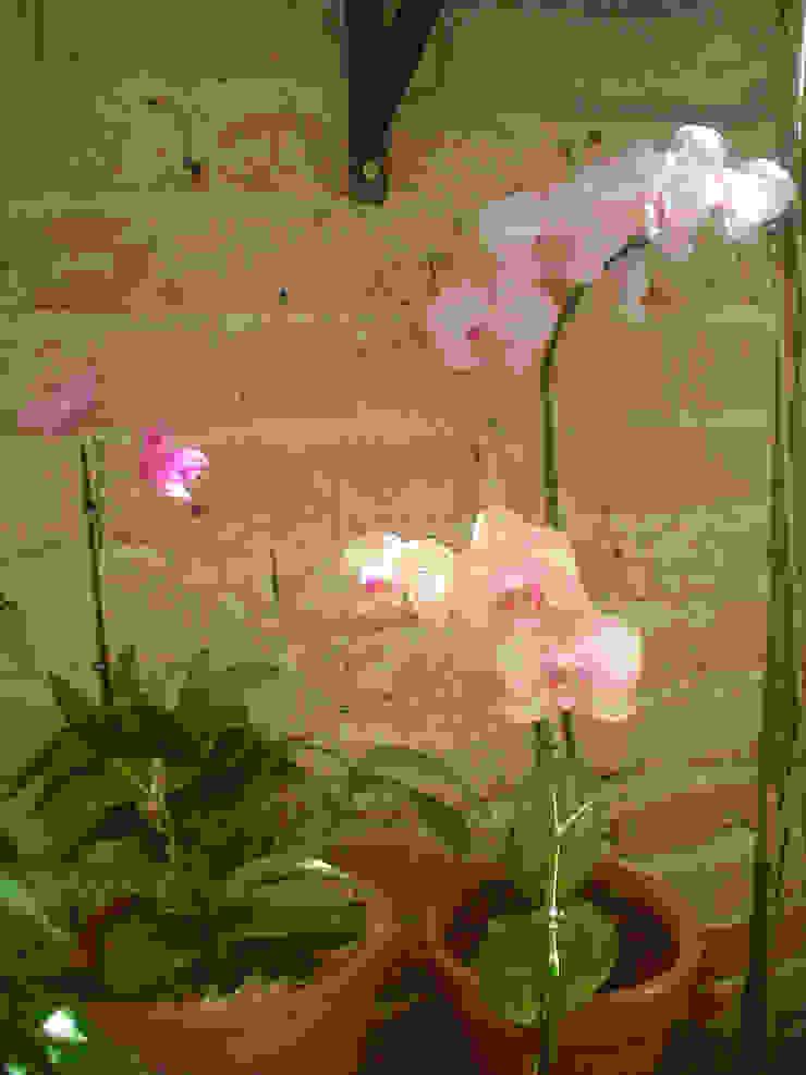 Vườn phong cách hiện đại bởi Línea Paisagismo.Claudia Muñoz Hiện đại
