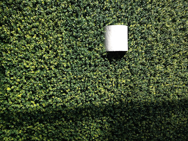 muro verde Casas tropicales de Armatoste studio Tropical