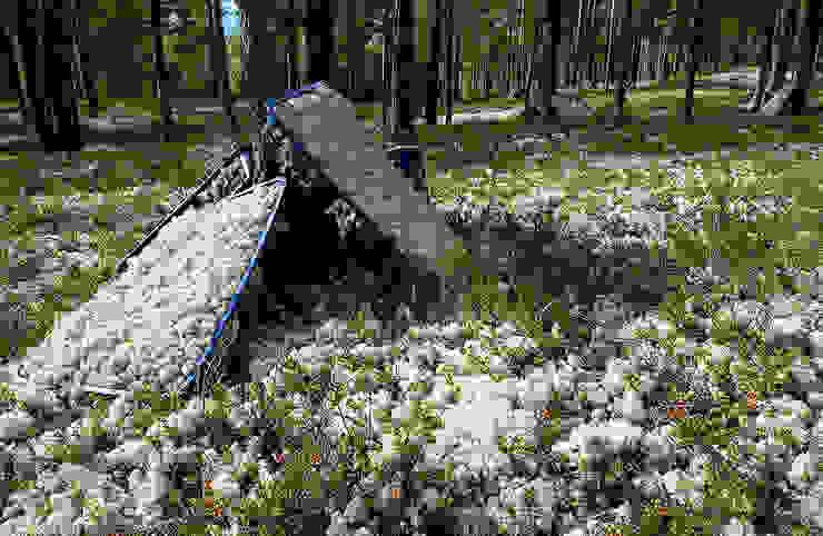 Canlı Tablolar Bakım İhtiyacı Olmayan Mumyalanmış Bitkiler İskandinav Ormanlarından Canlı Tablolar İskandinav