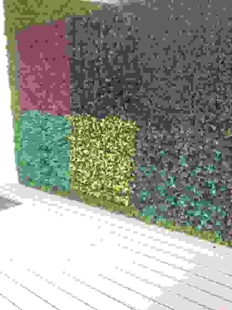 Grupo Boes Garden Plants & flowers