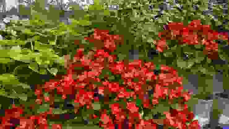 Pixel Garden Nowoczesny ogród od Pixel Garden Nowoczesny