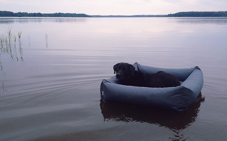 Outdoor Dog Beds par Cloud 7 Finest Interiors for Dogs & Dog Lovers Moderne