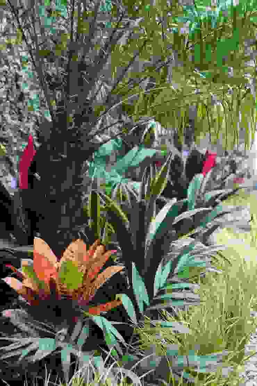 Tropical style garden by Estudio Nicolas Pierry: Diseño en Arquitectura de Paisajes & Jardines Tropical