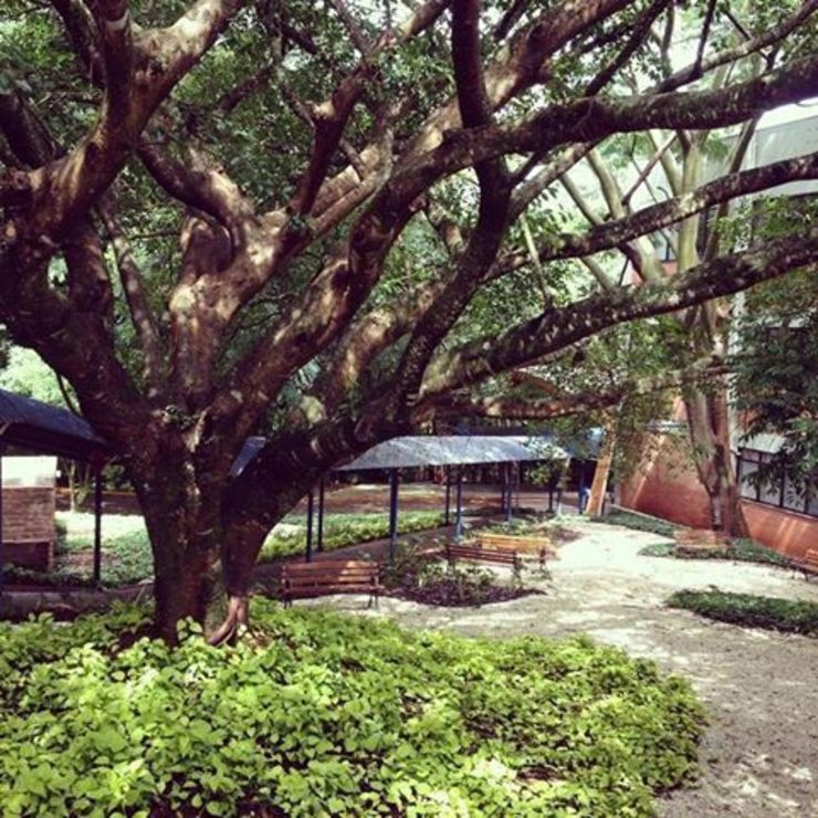 Jardim da Bibiloteca Escolas modernas por Adines Ferreira Paisagismo Moderno