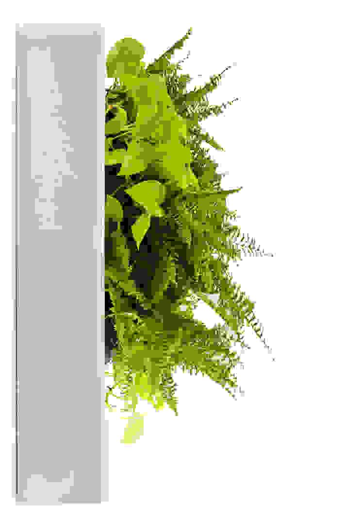 Florama - bok od FLORABO2 Klasyczny