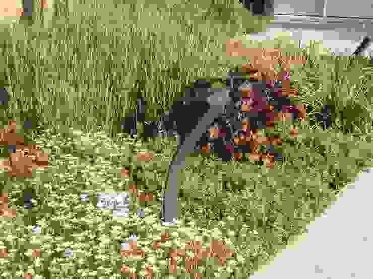 Klein achtertuin met grote waterpartij:  Tuin door Bladgoud-tuinen,