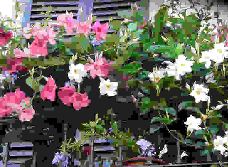 Jardines de estilo clásico de My Little Jardin Clásico