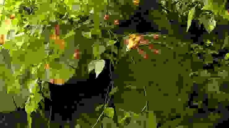van boom tot bed van Meubelmakerij Luitjens Landelijk
