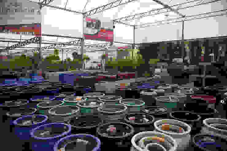 Setor de Vasos Vietnamitas Espaços comerciais clássicos por Blumengarten Plantas e Flores LTDA Clássico