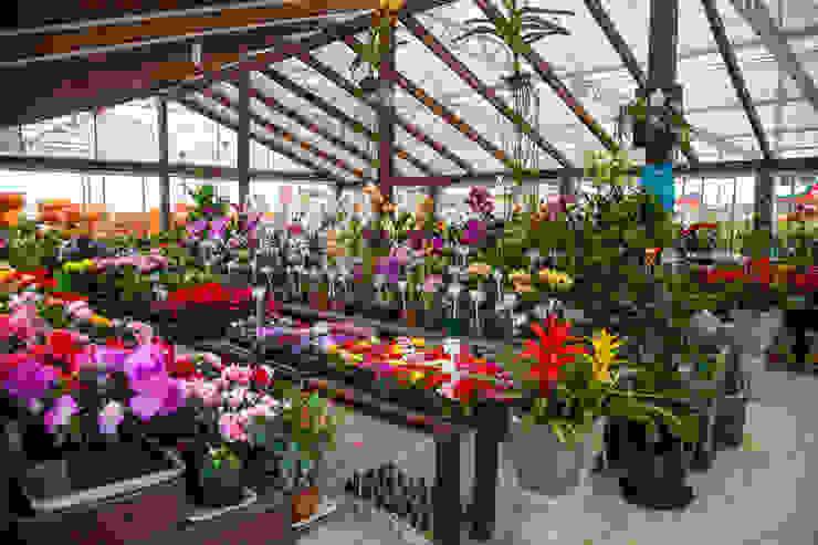 Setor de Plantas em Potes Espaços comerciais clássicos por Blumengarten Plantas e Flores LTDA Clássico
