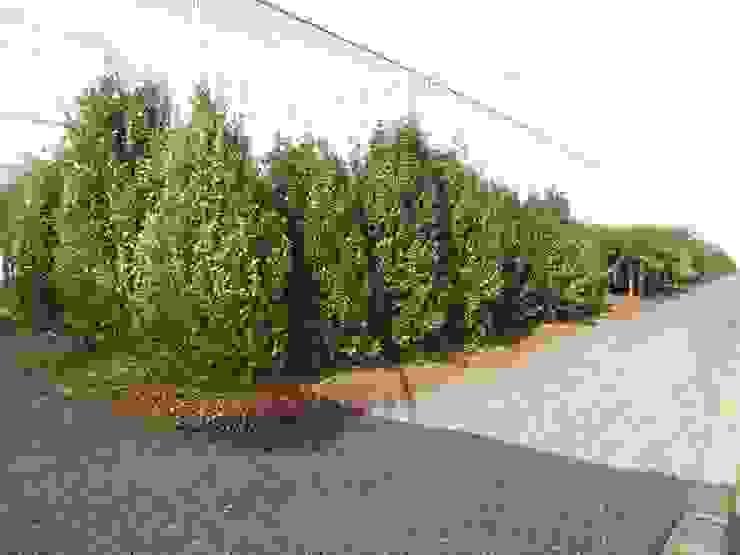 Setor de Plantas Externas Espaços comerciais clássicos por Blumengarten Plantas e Flores LTDA Clássico