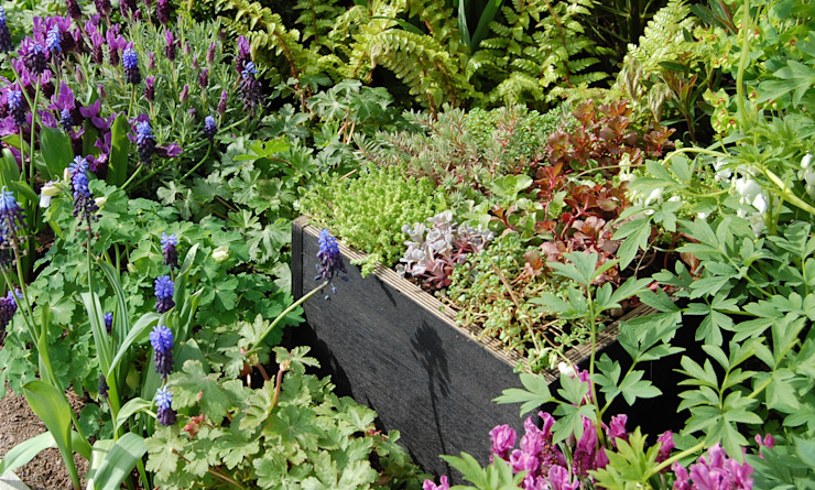 Office Box Vườn phong cách hiện đại bởi Robert Hughes Garden Design Hiện đại