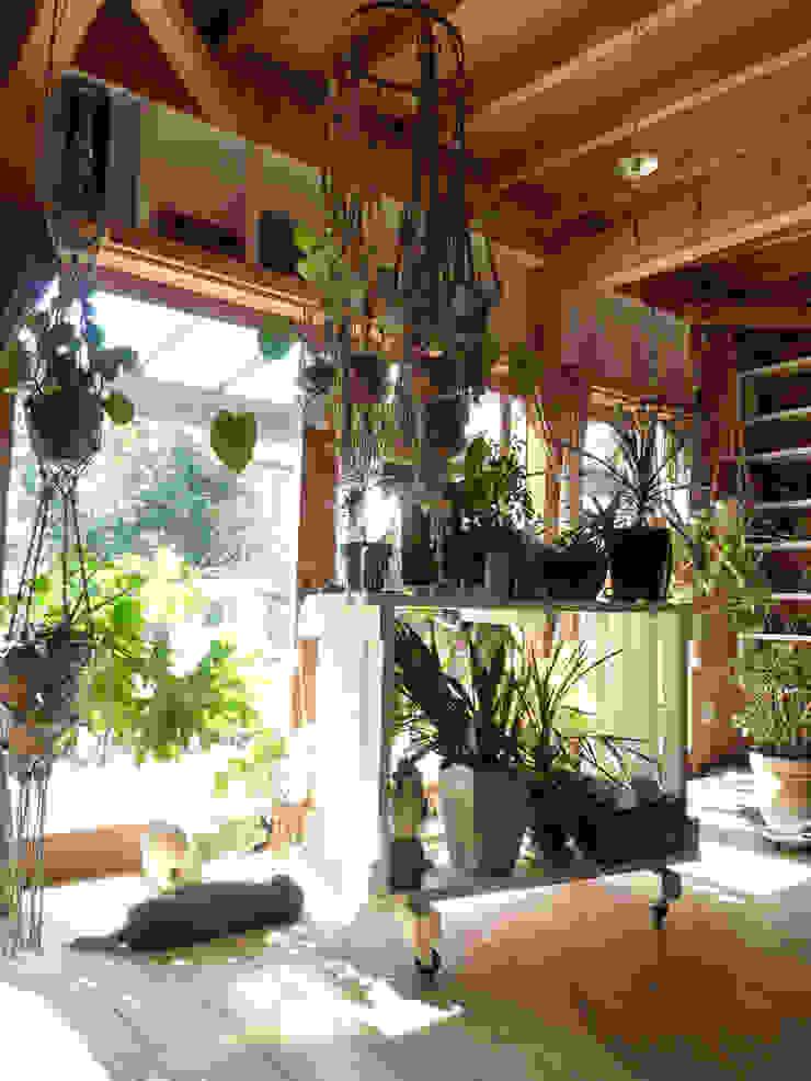 茂原の家 オリジナルスタイルの 温室 の 合同会社加藤哲也建築設計事務所 オリジナル