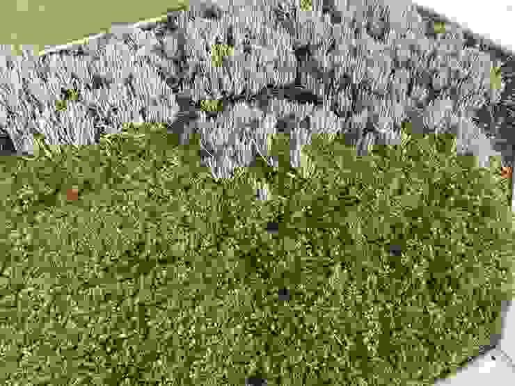 Mullaloo Project Project Artichoke Minimalist style garden