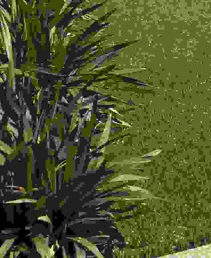 Duncraig Project Project Artichoke Modern garden