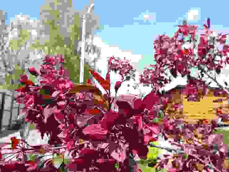 Яблоня цветет от ЛАНДАРХ Кантри
