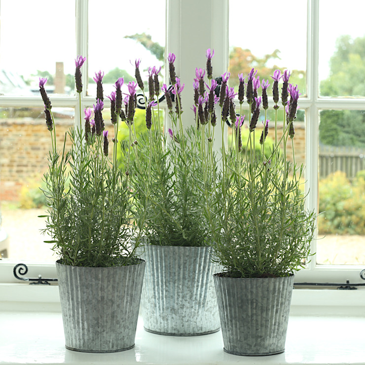Galvanised Ribbed Metal Planter par ELLA JAMES Classique