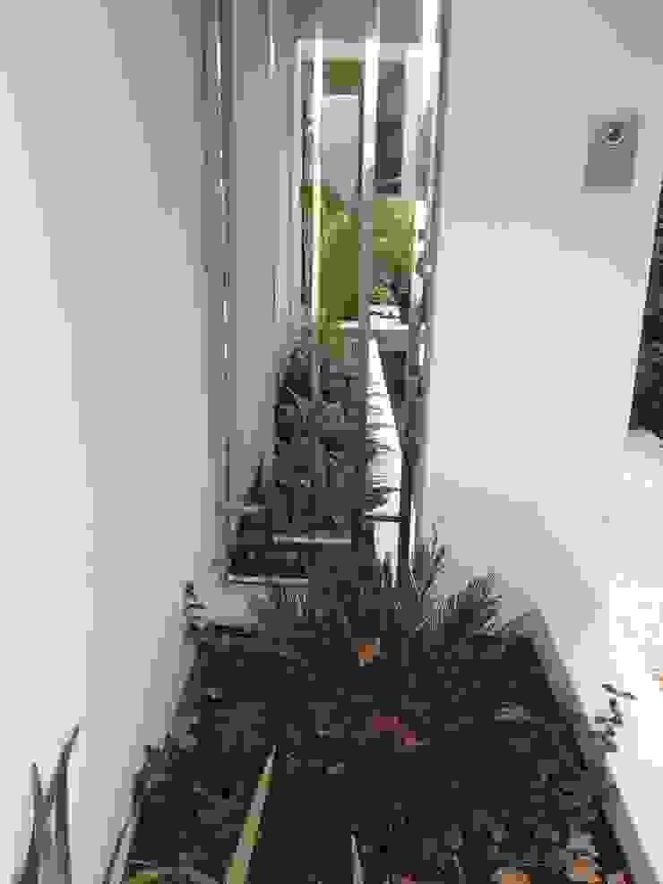 Applecross Project Artichoke Modern garden