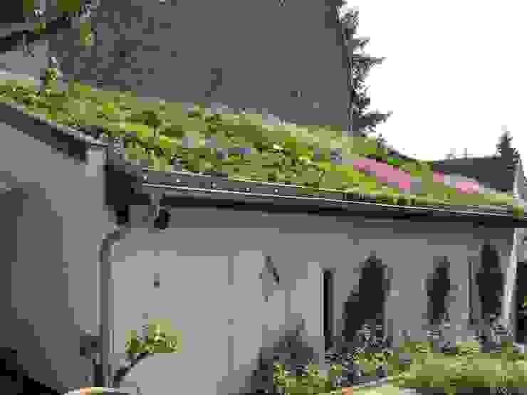 지중해스타일 정원 by Nagelschmitz Garten- und Landschaftsgestaltung GmbH 지중해
