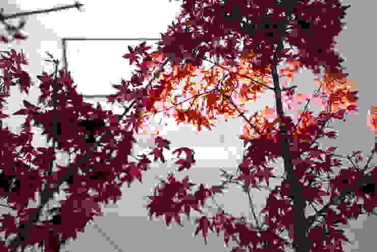坪庭 モダンな庭 の 一級建築士事務所 Atelier Casa モダン