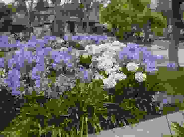 Şefkat Çiçeği-Afrika Zambağı-Agapantus Klasik Bahçe CanlıBahçe Fidancılık Klasik