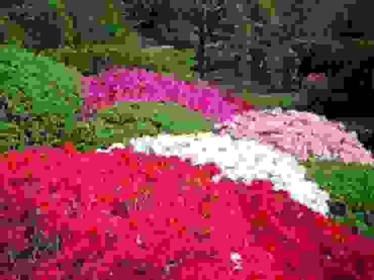 CanlıBahçe Fidancılık – açelya:  tarz Bahçe,