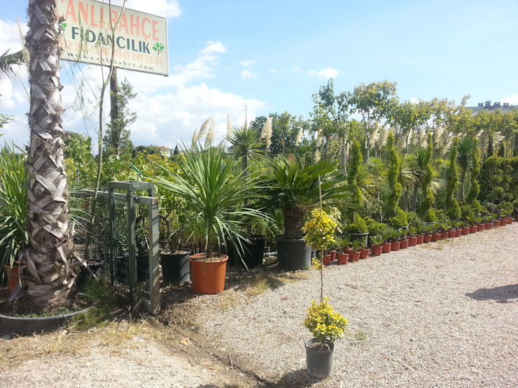 CanlıBahçe Fidancılık Classic style garden
