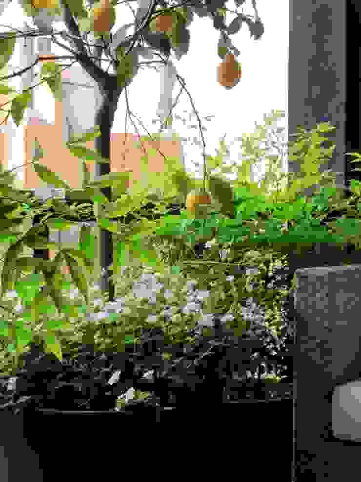 Una terraza pequeña Balcones y terrazas de estilo mediterráneo de Asilvestrada Mediterráneo