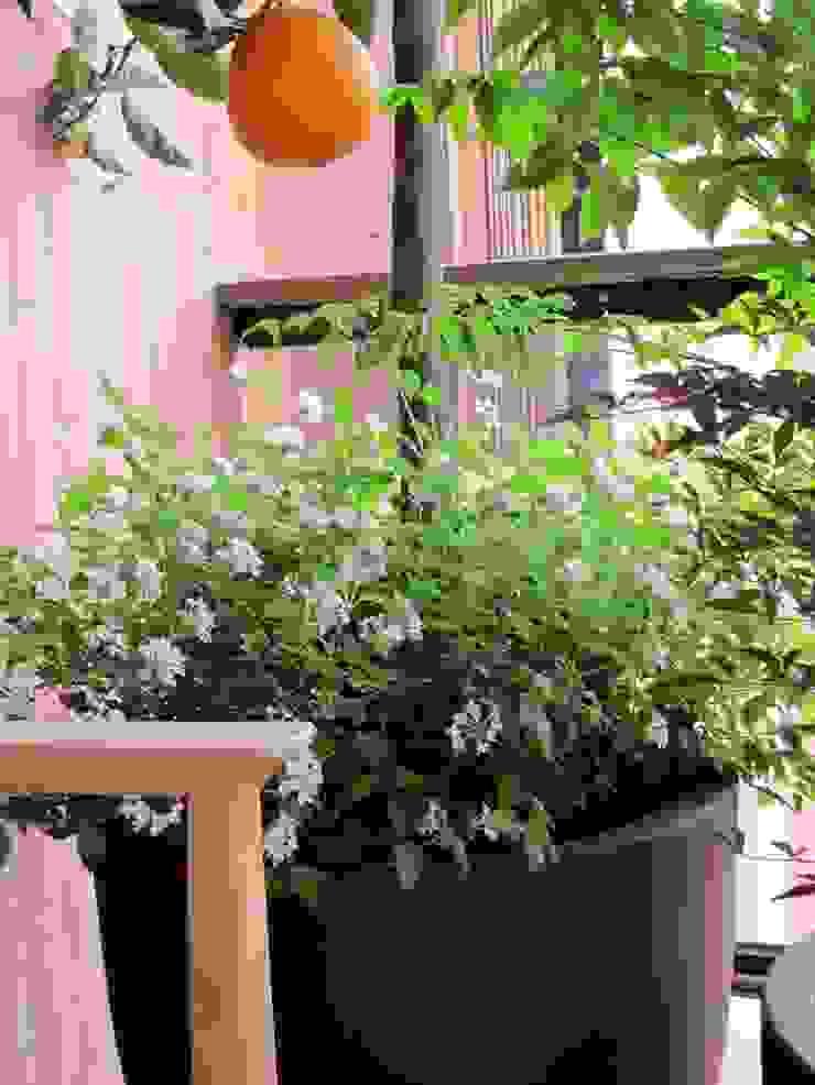 Frutales en tu terraza Balcones y terrazas de estilo mediterráneo de Asilvestrada Mediterráneo