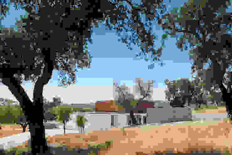 QUINTA DOS POMBAIS HOUSE Casas modernas por OPERA I DESIGN MATTERS Moderno Madeira Acabamento em madeira