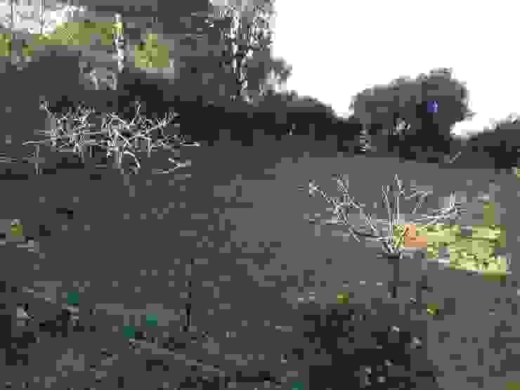 jardin 2ème villa par In&Out Garden Méditerranéen